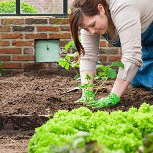 Groenten- en fruittuin meststoffen